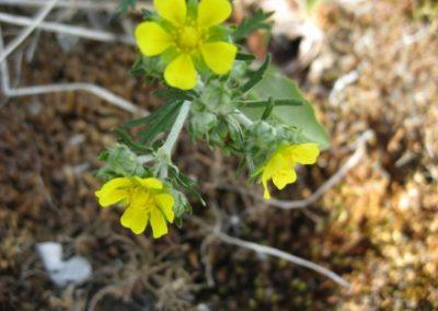 blomster02