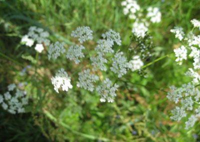 blomster03