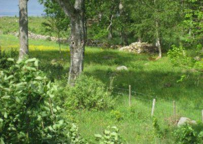 skoven02