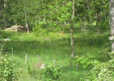 skoven03